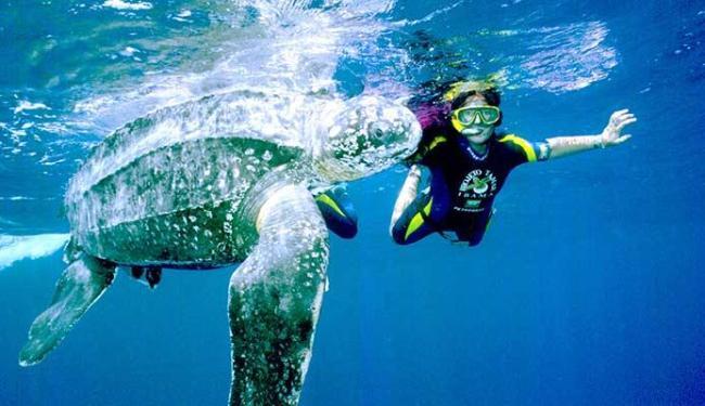 A produção de ovos das tartarugas marinhas reduziram 40% - Foto: Divulgação