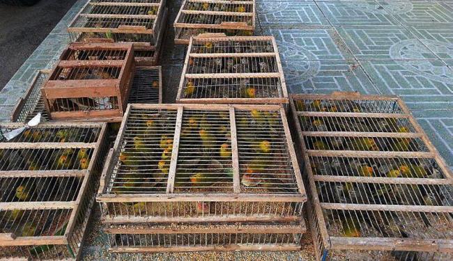 Imagem da Polícia Rodoviária Federal mostra caixas com centenas de aves - Foto: PRF | Divulgação