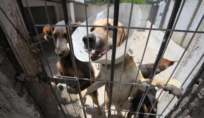 Apesar de ter estrutura só para 300 animais, abrigo tem 520 pets - Foto: Edilson Lima | Ag. A TARDE
