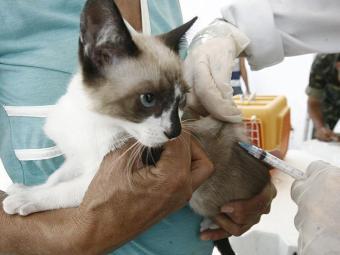 A vacinação foi prorrogada até dia 29 - Foto: Luiz Tito | Ag. A TARDE