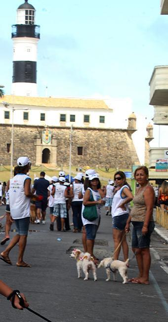 A nona edição da Cãominhada acontece nesse domingo, 6, na Barra - Foto: Lúcio Távora | Ag. A TARDE