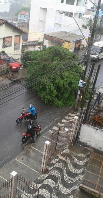 Árvore interdita a Cruz da Redenção no início desta manhã - Foto: Reprodução   Marylin Boaventura     Ag. A TARDE