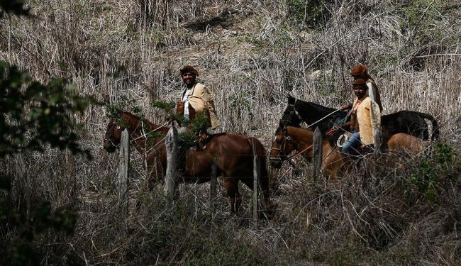 Dilma sancionou nesta quarta a lei que reconhece a profissão de vaqueiro no Brasil - Foto: Luiz Tito   Ag. A TARDE