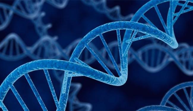 Foi avaliado o DNA de quase oito mil mostras de 51 tipos de tecido e células do corpo - Foto: Divulgação