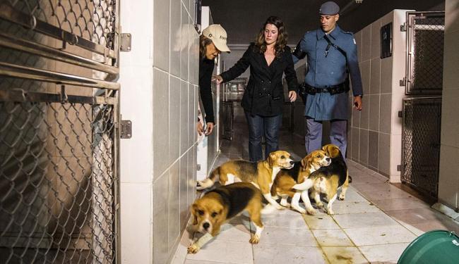 Ativistas retiraram cães da raça Beagle do laboratório em São Paulo - Foto: Avener Prado | Folhapress