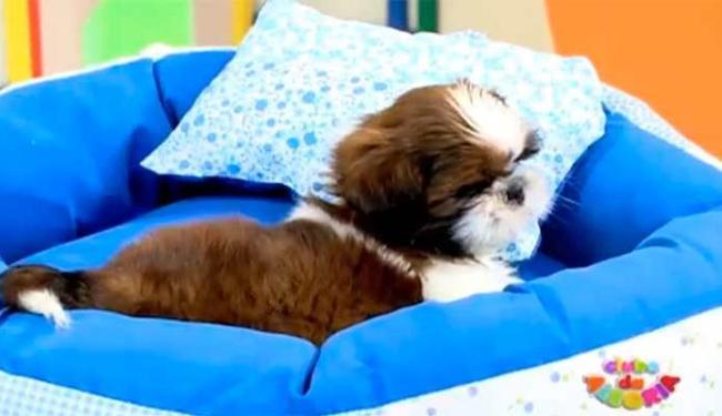No vídeo, Carla mostra o cachorro que será sorteado para as crianças - Foto: Reprodução | Youtube