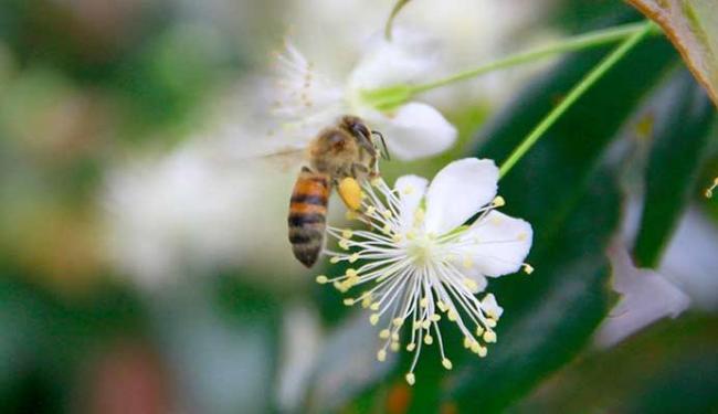 Cientistas utilizaram câmeras de alta velocidade para gravar as aterrissagens das abelhas - Foto: Joá Souza | Ag. A TARDE