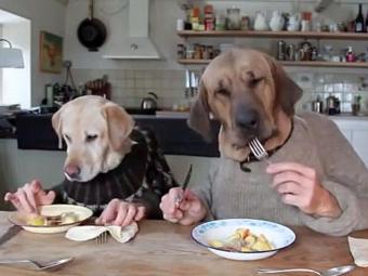 Vídeo com cães e mãois humanas é sucesso no youtube - Foto: Reprodução