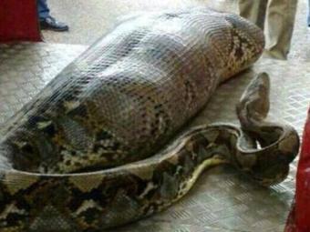 Imagem de cobra foi compartilhada nas redes sociais - Foto: Reprodução | Facebook