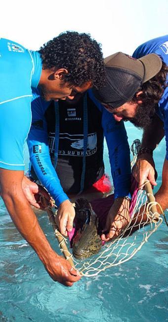 Peixes foram libedrados no mar depois de exames e marcação - Foto: Divulgação