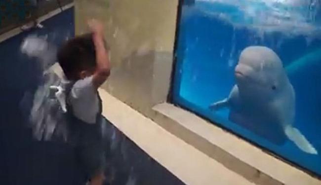 Beluga sopra água por cima do aquário e molha o garoto - Foto: Reprodução