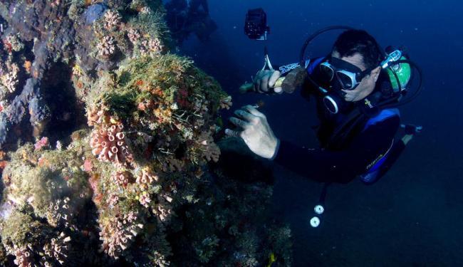 Monitor de recifes da ONG Pró-mar, José Carlos Barbosa, trabalha na remoção de colônias - Foto: Lúcio Távora | Ag. A TARDE