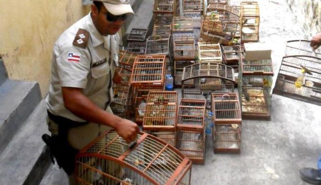 Aves foram encontradas em São Gonçalo dos Campos - Foto: Divulgação   Telma Lobão