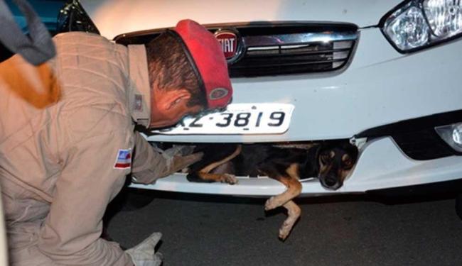 Animal foi retirado com vida por homens do Corpo de Bombeiros - Foto: Reprodução | Blog do Anderson