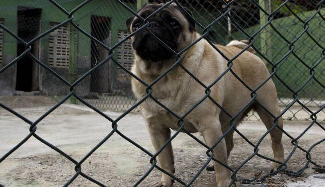 Canis oferecem hospedagem para os pets durante ausência dos donos - Foto: Eduardo Martins | Ag. A TARDE