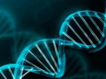 Desde 76 se trabalha na recuperação dos restos ósseos de pelo menos 28 indivíduos para encontrar DNA - Foto: Divulgação