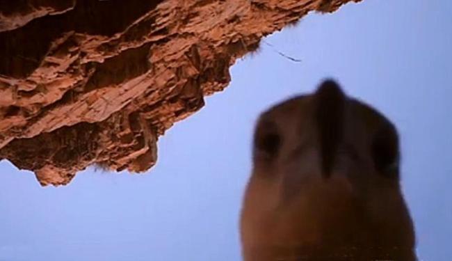 Pássaro pegou a câmera em maio, mas imagens só foram divulgadas nesta segunda - Foto: Reprodução
