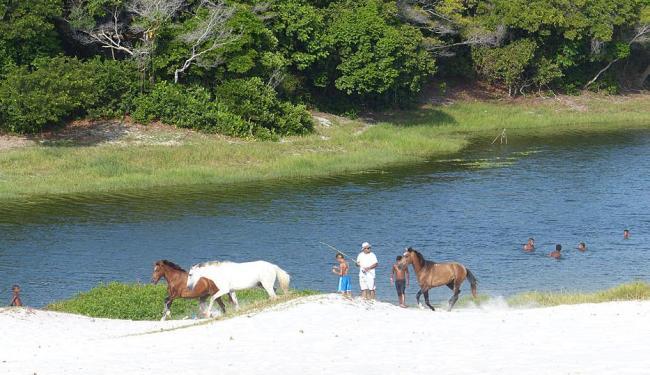 Cavalos circulam livremente pela região da lagoa todos os dias, enquanto frequentadores se banham - Foto: Evandro Teixeira | Divulgação
