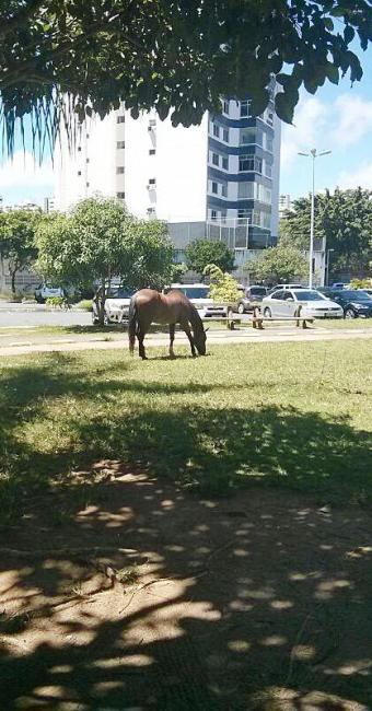 Cavalo pasta livremente em praça do bairro - Foto: Ronaldo Silva | Foto do leitor
