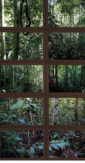 As plantas têm propriedades que podem inibir a replicação do vírus da dengue - Foto: Divulgação