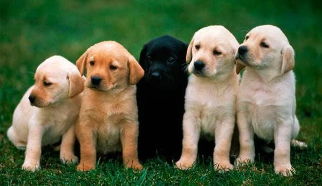 Até para fazer necessidades básicas os cães se localizam - Foto: Divulgação