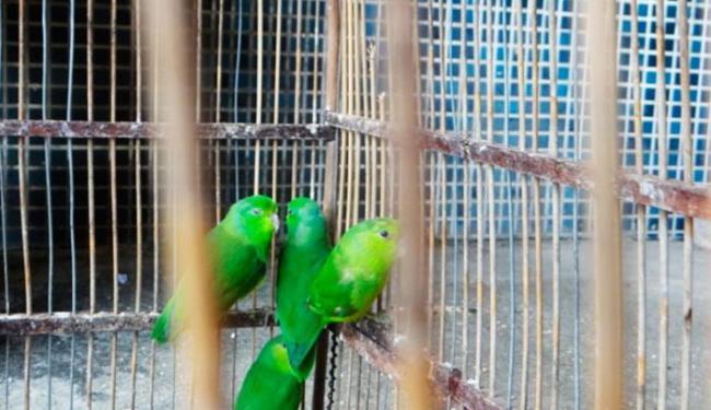 Muitas das aves apreendidas são espécies em extinção - Foto: Aldo Matos/Acorda Cidade
