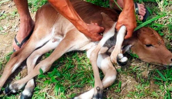 O animal não consegue andar por conta da anormalidade - Foto: Victor Oliveira/Site Voz da Bahia