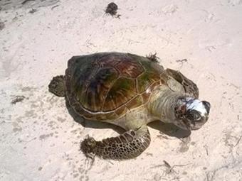Animal apareceu morto na areia da praia de Boulevard - Foto: Agnello Britto Ribeiro l Foto leitor