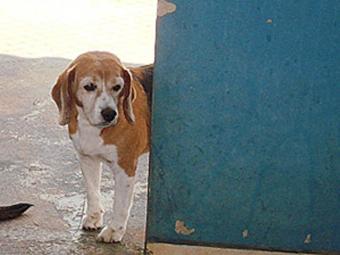 Cão foi fotografado no canil da prefeitura antes de ser morto - Foto: Divulgação
