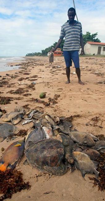 Animais mortos foram coletados e enterrados por pescadores na areia da praia - Foto: Lúcio Távora | Ag. A TARDE