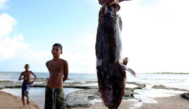 Animais foram encontrados mortos nas areias da praia - Foto: Lúcio Távora   Ag. A TARDE