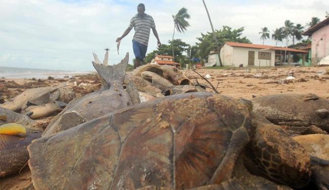 Aparição de peixes e tartarugas mortos assustou os moradores de Aratuba - Foto: Lúcio Távora | Ag. A TARDE