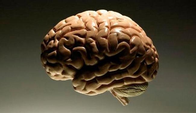 Pesquisadores examinaram o córtex cerebral, a camada mais externa do cérebro - Foto: Divulgação