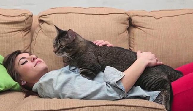 Emily Zarvos no sofá com o Gatosauro Rex, Pickles - Foto: Reprodução