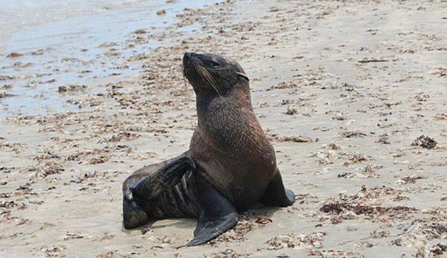 Animal é jovem e está muito magro, segundo veterinários - Foto: Instituto Baleia Jubarte   Divulgação