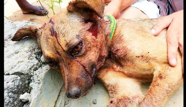 Animal foi encontrado com escoriações no pescoço e hematomas na cabeça - Foto: Divulgação | ONG Célula Mãe