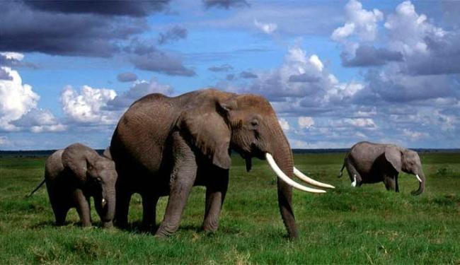 O consolo entre animais é algo considerado raro - Foto: Divuglação