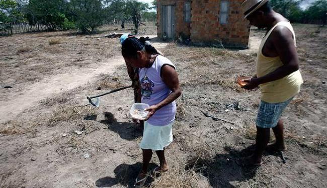 Seca já atinge o interior do Nordeste e prejudica a colheita - Foto: Luiz Tito | Ag. A TARDE