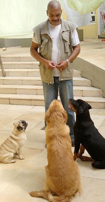 O adestramento profissional dos animais é realizado a partir de técnicas específicas - Foto: Divulgação