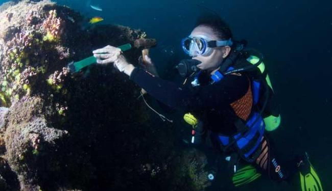 Bióloga Amanda de Carvalho em ação no fundo do mar - Foto: Lúcio Távora   Ag. A TARDE