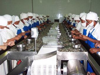Produção da Valença da Bahia Maricultura: sem licença, empresa não tem crédito - Foto: Divulgação