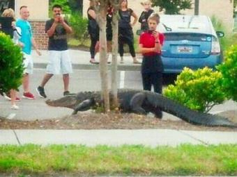 Aligátor de 2 metros de comprimento no estacionamento do centro comercial - Foto: Reprodução | Twitter
