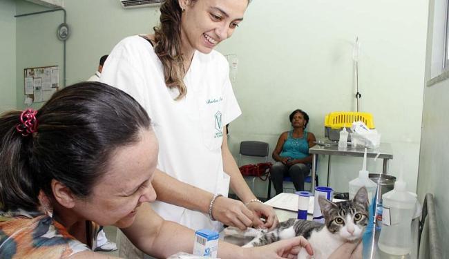 Médica Bárbara Farias cuida da gata de Claudia Mota, Joaquina, paciente do hospital - Foto: Joá Souza | Ag. A TARDE