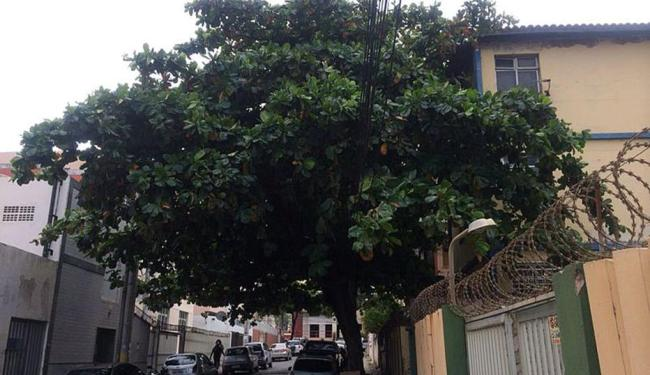 Morador solicita poda da árvore há três meses, mas ainda não foi atendido - Foto: Maurício Oliveira | Cidadão Repórter