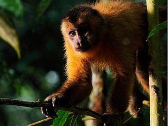 Amazônia levou três anos para ser realizado e consumiu R$ 26 milhões - Foto: Divulgação