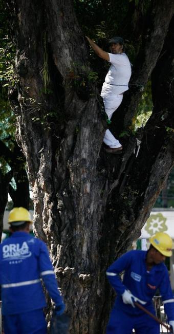 Homem se acorrentou na árvore nesta manhã - Foto: Raul Spinassé | Ag. A TARDE