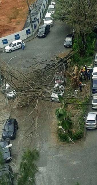 Árvores causaram estragos aos veículos e deixaram moradores sem energia - Foto: João Luz   Cidadão Repórter