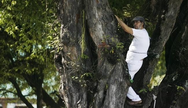 O escritor Roberto Torres se acorrentou ao galho de um tamarineiro, no dia 3, em protesto à ação da - Foto: Raul Spinassé | Ag. A TARDE | 03.06.2014