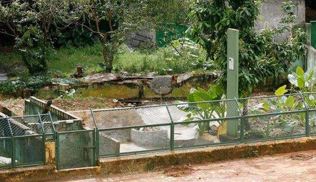 Espaços como o de jacarés-de-coroa estão fechados e sem animais expostos porque vão ser reformados - Foto: Marco Aurélio Martins | Ag. A TARDE