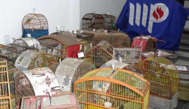 Dentre as aves apreendidas estavam canários da terra, papa capim, curió, jandaia, cardea e tico-tico - Foto: Divulgação | MP-BA